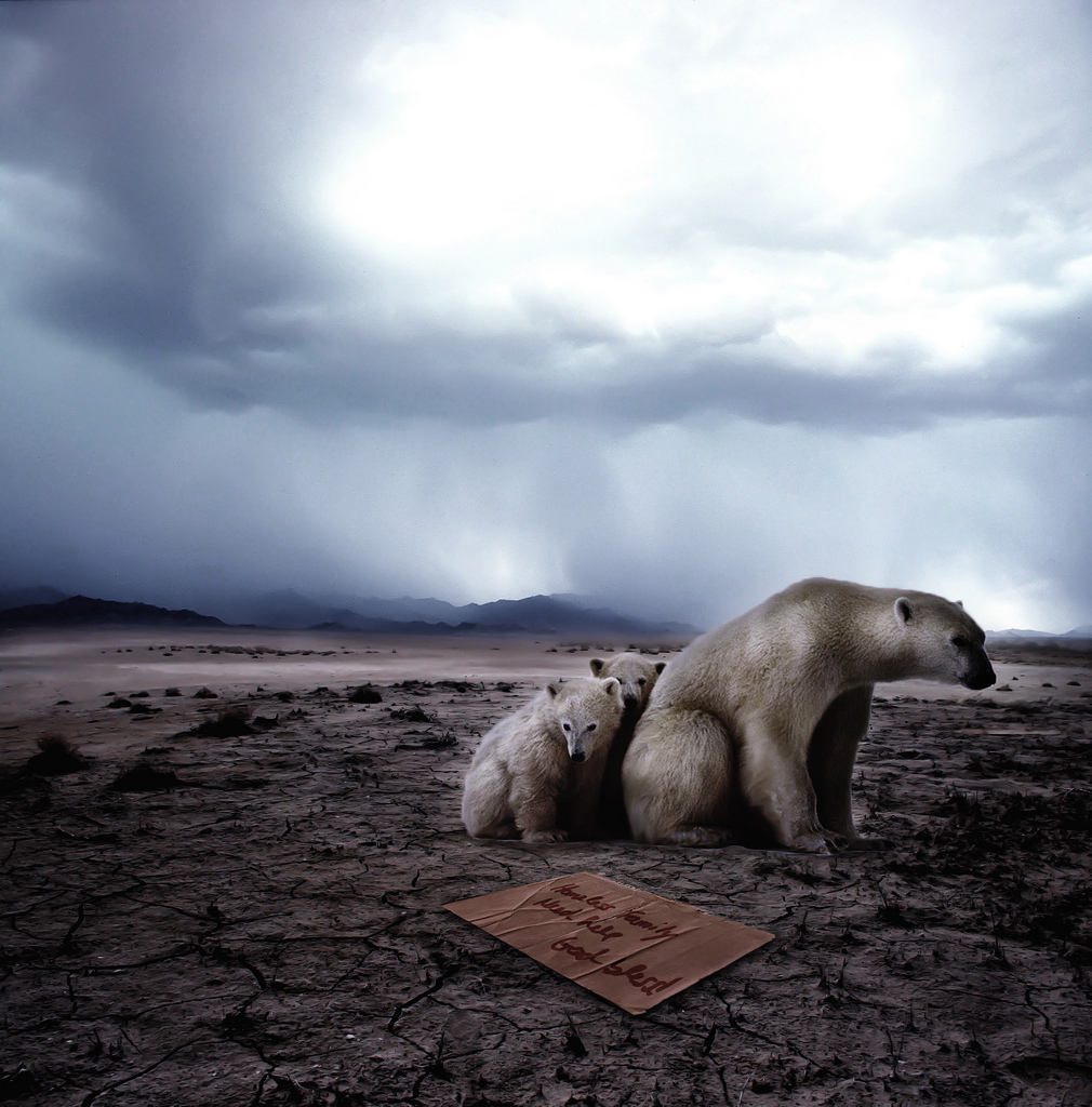 homeless-polar-bears